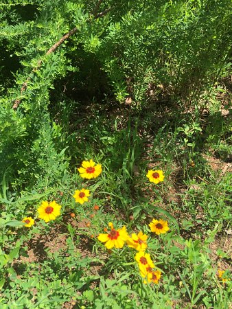 Mountainburg, AR: Many wildflowers along the trails