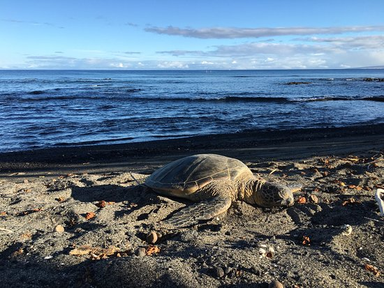 Mauna Lani Bay Hotel & Bungalows: photo6.jpg