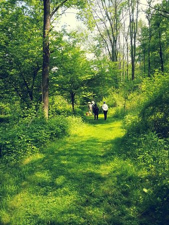Wilmot, โอไฮโอ: Hiking there with friends and our dogs this spring