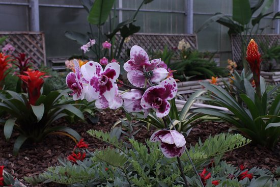 Coombs, كندا: Orchids and Bromeliads, Butterfly World Coombs
