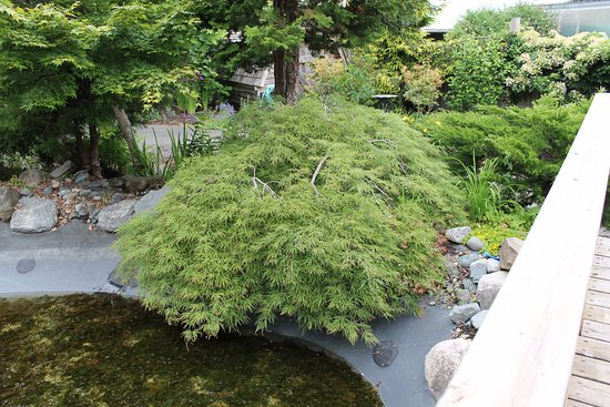 Coombs, كندا: Outdoor gardens featuring Japanese Maple