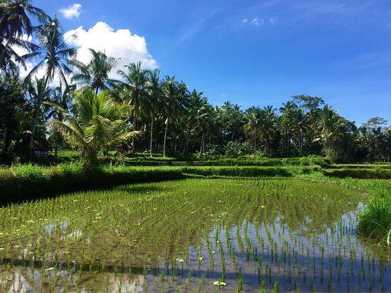 Villa Agung Khalia: photo3.jpg