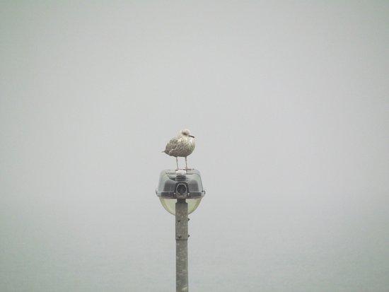 Ramona Lodge: Foggy morning view