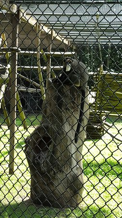 Cape May County Park & Zoo: 20160729_121016_large.jpg