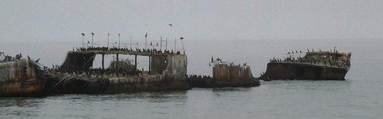 BEST WESTERN Seacliff Inn: Shipwreck at nearby Seacliff Beach