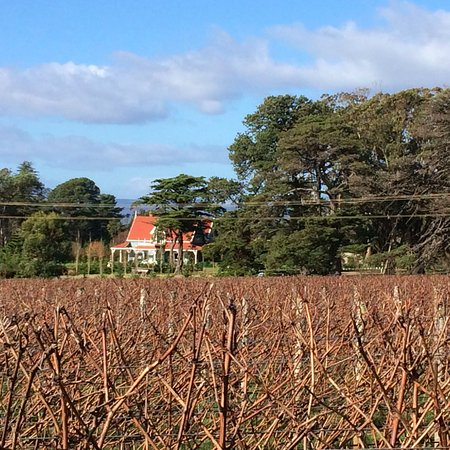 Shearwater, Australia: A view from the field next to cellar door