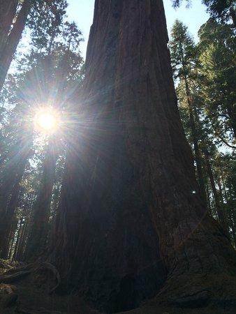 Visalia / Sequoia National Park KOA: photo0.jpg