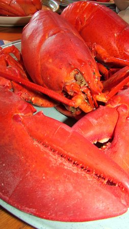 Stonington, ME: Just out of the steamer. Look at the size of that claw