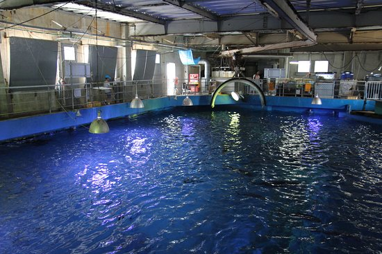 Kushimoto Marine Park Aquarium