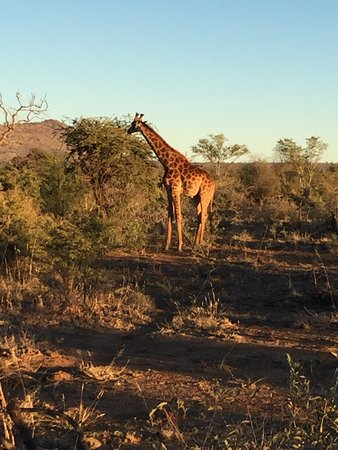Rhulani Safari Lodge: photo3.jpg