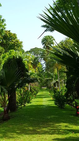 Botanical Gardens : this is a view of the isle