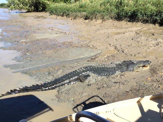Arnhem, Australia: Jumping Crocodile Cruises