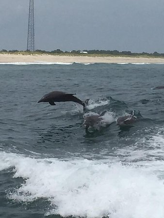 Wildwood Crest, NJ: Amazing views of dolphins jumping out of the water!
