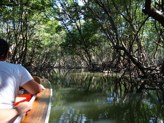 Tawau, Malaysia: Our boat drifting through the mangrove creeks