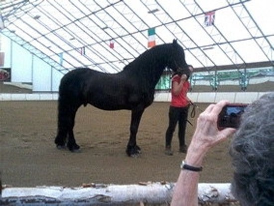 Townshend, VT: Friesian champion