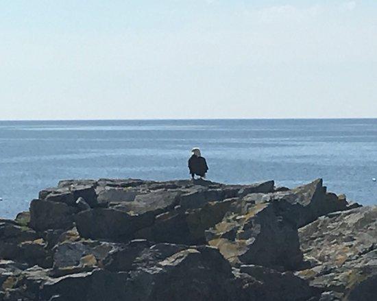 Acadian Nature Cruises: photo0.jpg