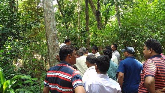 Sabaragamuwa Province, Σρι Λάνκα: In the garden