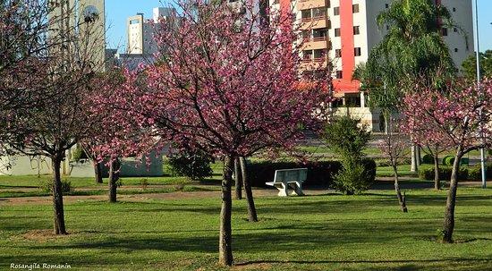 Praça Roque Torce Filho