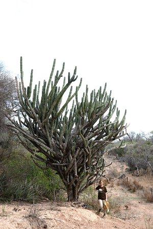 Province of Chaco, Argentina: Parque Nacional El Impenetrable,