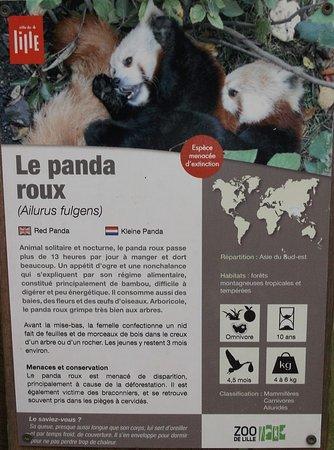 Zoo De Lille Carte Visite Panda Roux