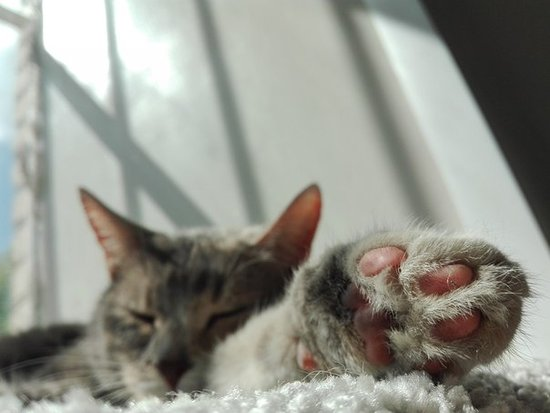 Cat Cafe LyaMur