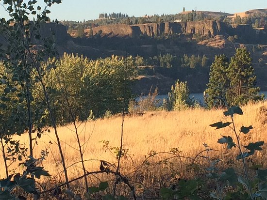 Mosier, OR: Campsite View