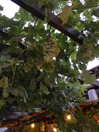 Bunch of Grapes which hang from the the open roof