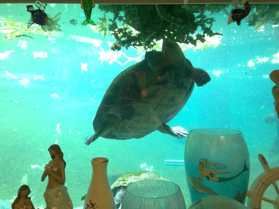 Turtle from the gift shop window picture of lowry park tampa lowry park turtle from the gift shop window negle Choice Image