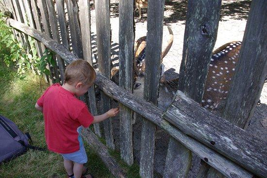 Parc Zoologique de Pescheray: un peu d'herbe fraîche, ça vous dit?