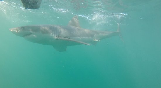 White Shark Ventures : photo0.jpg