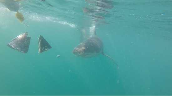 White Shark Ventures : photo1.jpg