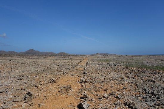 Washington-Slagbaai National Park, Bonaire: Hoe dichter bij de zee, hoe droger.