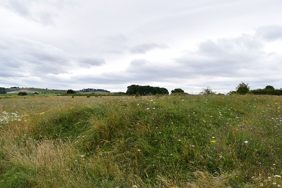 Sixpenny Handley, UK: Martin Down reserve, on the road to Salisbury