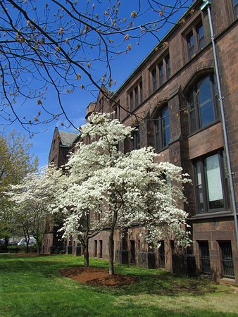 Yale University: Beautiful buildings and trees!