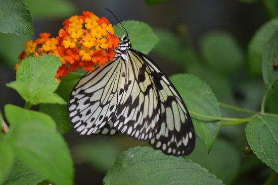 Belle Photo Papillon Pose Sur Une Fleur Le Tropique Du Papillon