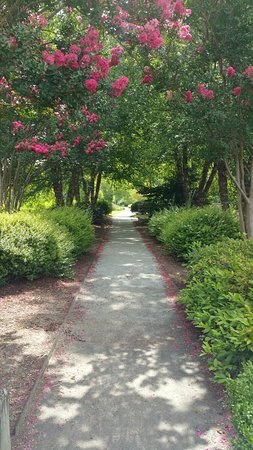 Lake Lure, NC: 20160801_113245_large.jpg