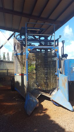 Kalaheo, HI: Coffee bean harvester
