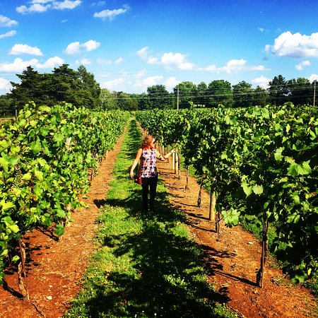 Buckingham, Pensilvania: Loved walking through the vineyards and seeing the grape verasion