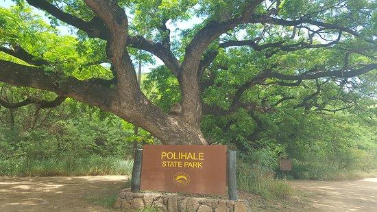 Polihale State Park: Monkeypod tree