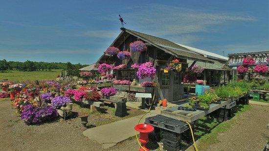 Awesome Blossom Organics