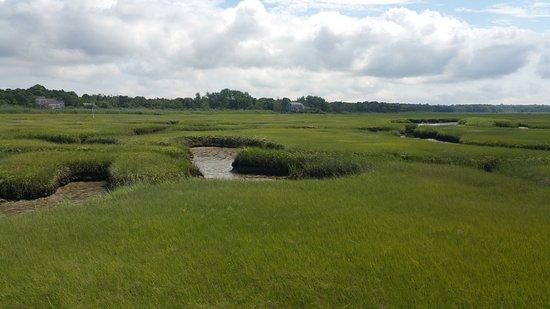 Gray's Beach: marshlands