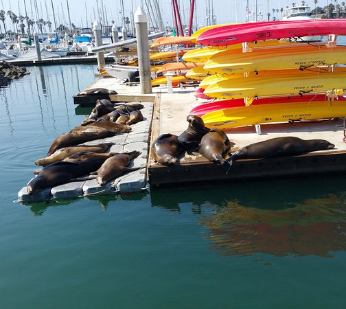 ‪Channel Islands Kayak Center Day Tours‬