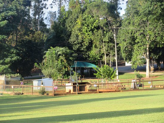 Malanda Falls Caravan Park: View the large grassy area where we camped.