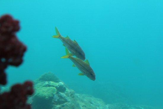 Kushimoto Marine Park Undersea Tower : Kushimoto Marine Park Underwater Observation Tower