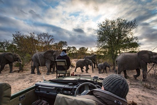 nThambo Tree Camp: game driving with elephants