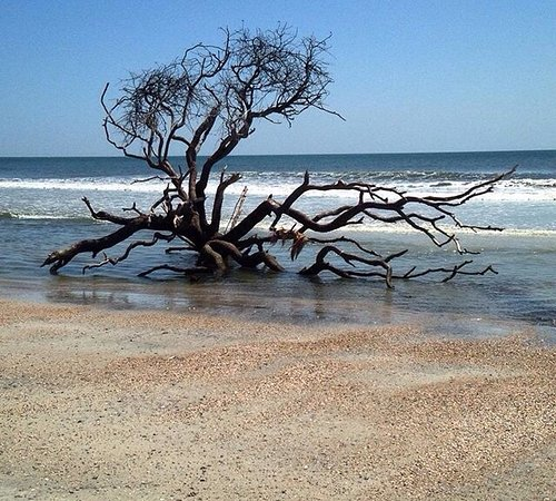 Island Beach State Park: Picture Of Little Talbot Island State Park