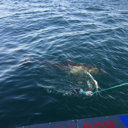 Sharklady Adventures: uma isca é lançada ao mar para atrair o tubarão