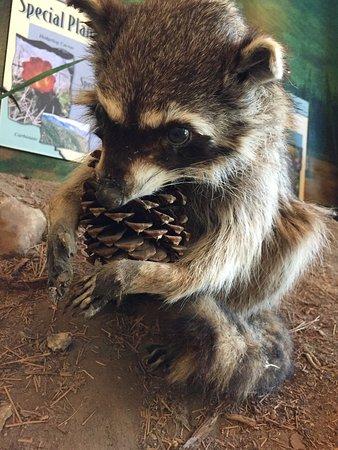 Big Bear Discovery Center : photo2.jpg