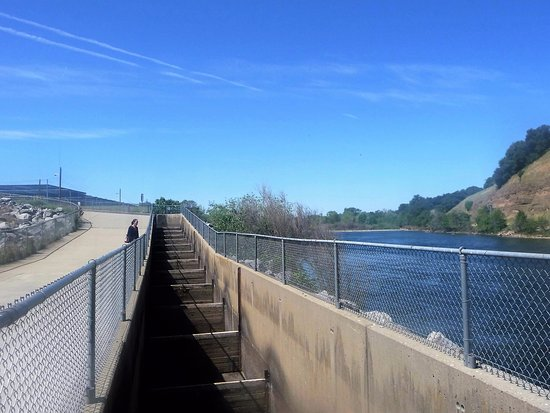 Nimbus Dam and Fish Hatchery : Fish ladder