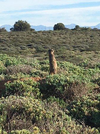 Meerkat Magic: photo2.jpg